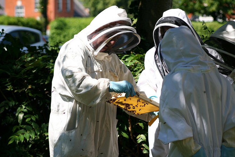 NRI Beekepers group inspecting their hives