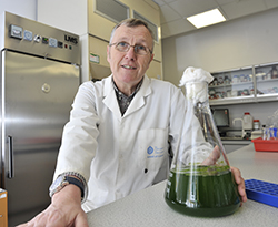 A2817a-Seaweed-could-be-next-new-biofuel-Copy