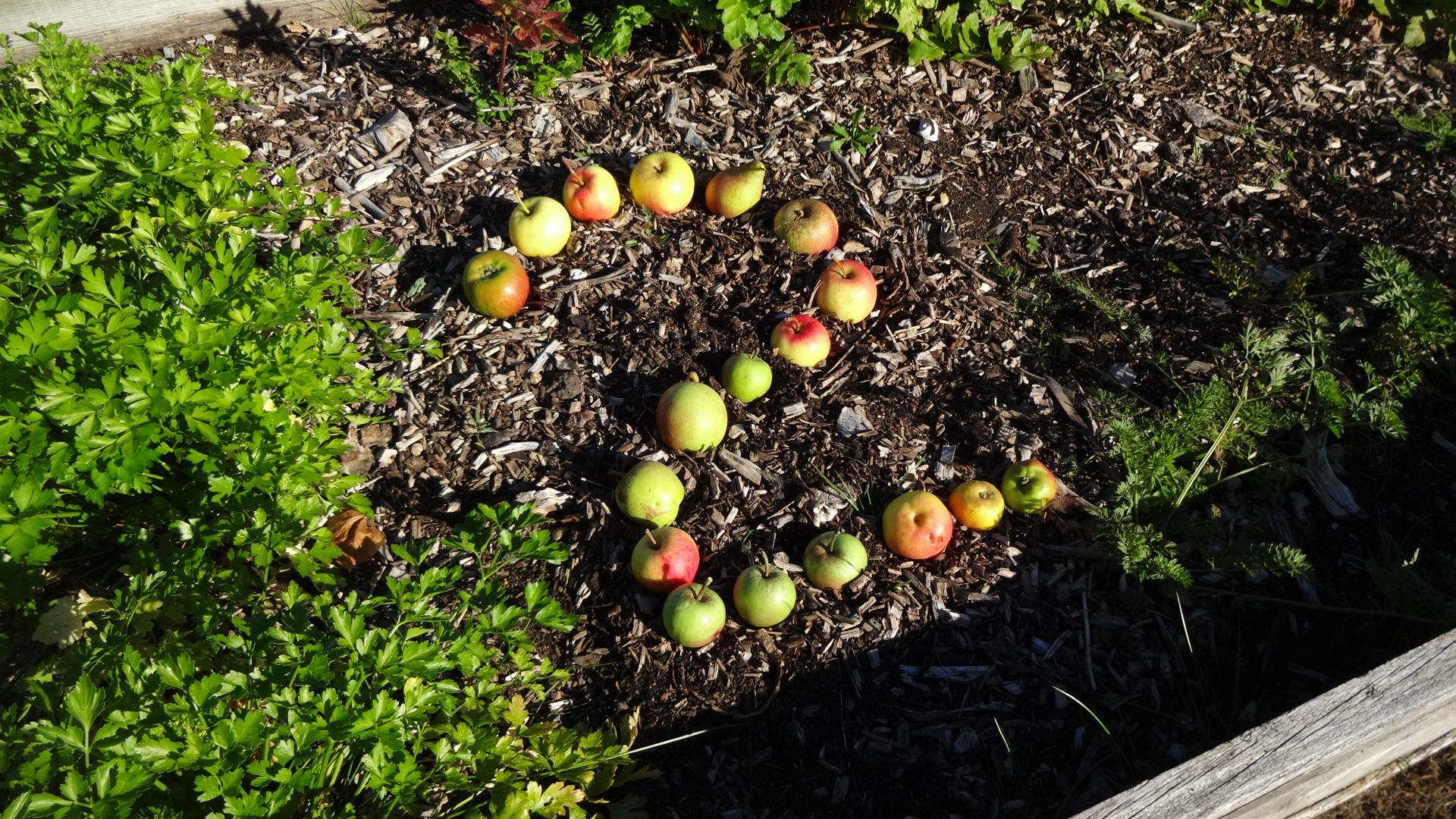Avery Hill Edible Garden | Sustainability: University of ...